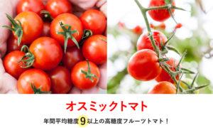 高糖度フルーツトマトの生産拠点 オスミック・アグリコミュニティが千葉に開業